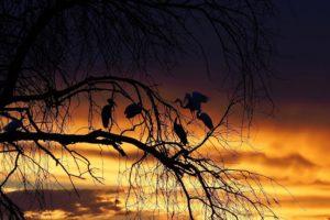 loors botswana safari sunset