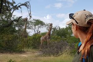 corina safari guide