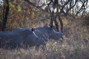 rhino babies guest photos