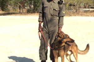 susan anti poaching dog and ranger