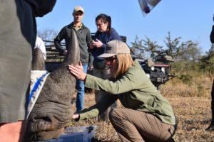 susan rhino notching