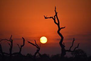 susan sunset