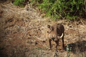 Pumba Makuleke