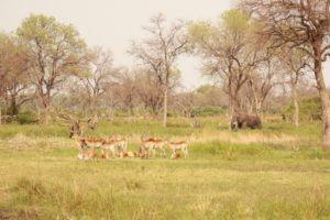 britta safari gme drive