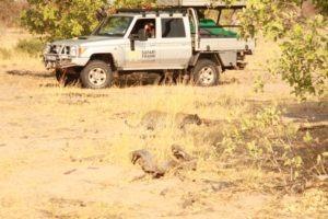 britta safari leopard