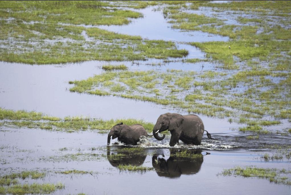 Botswana elephants crossing