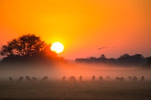 Busanga sunrise kafue zambia