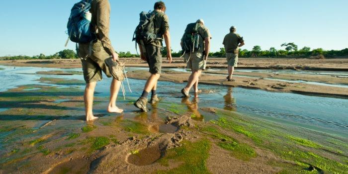 Ecotraining Walking