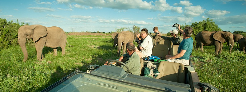 Ecotraining Elephant in car wide angle