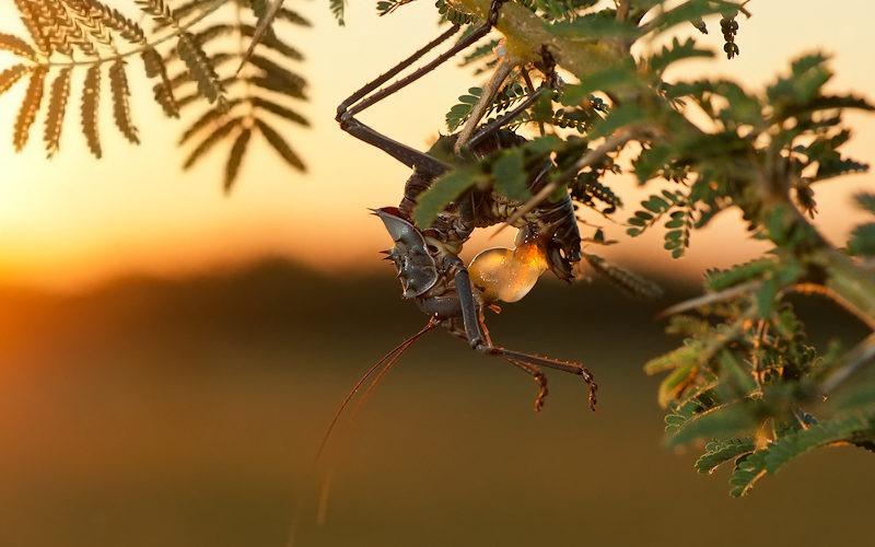 Ecotraining Ground Cricket