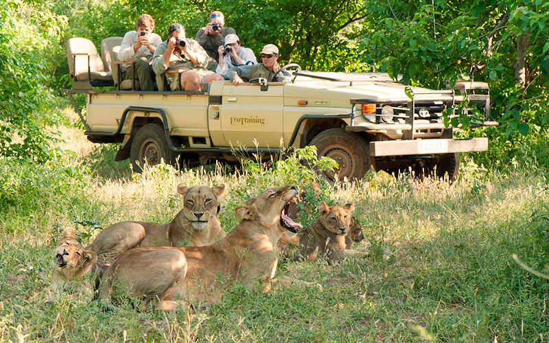 Ecotraining Lion viewing