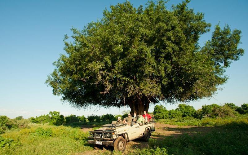 Ecotraining Mashatu tree