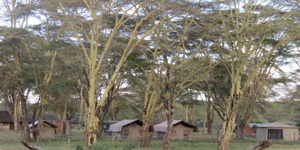 Ecotraining lewa camp