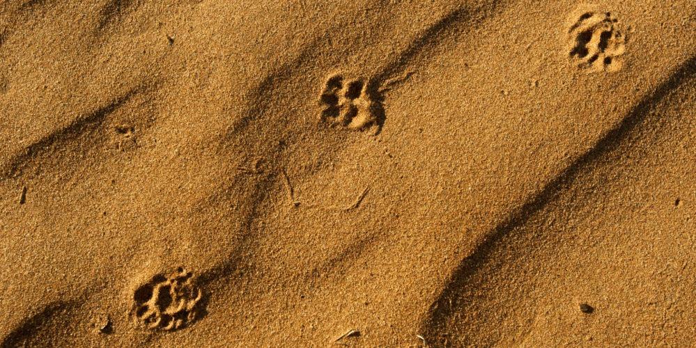 Ecotraining tracking sand