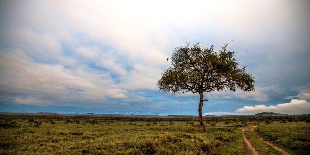 Kenya Borana landscape