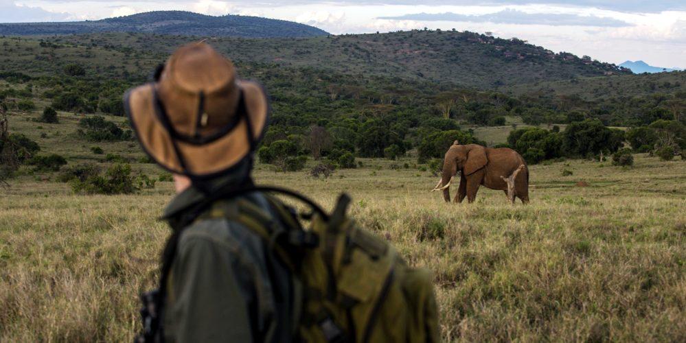 Kenya Borana Walking