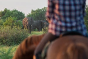Northern Tuli Botswana elephant viewing from horse back