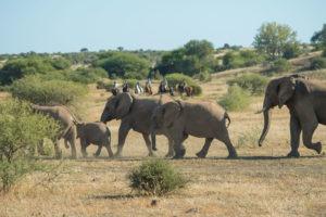 Northern Tuli Botswana horse riding with elephants