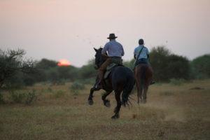 Northern Tuli botswana horse riding gallop