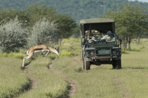 Ongava Tented Camp Drive