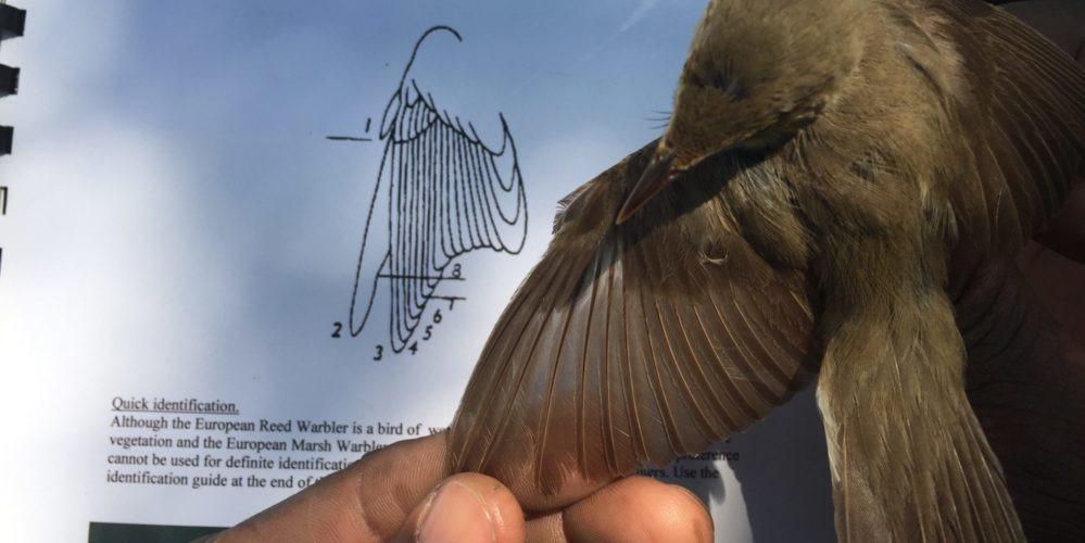 OGS-Specialist birding skills