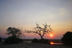 Zimbabwe Sunset a Chobe NP David Havemann
