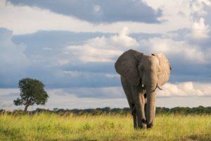 botswana boating photo safari