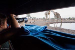 botswana mashatu photo giraffe from hide
