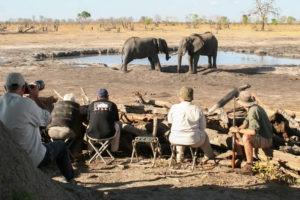 botswana photo safari at dam with elephants
