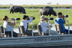 botswana photo safari hippos