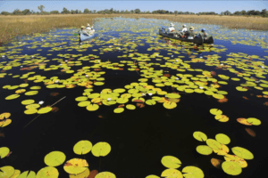 botswana selinda spillway canoe lillies
