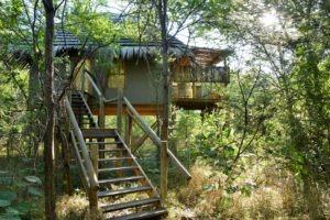 chobe bakwena lodge garden