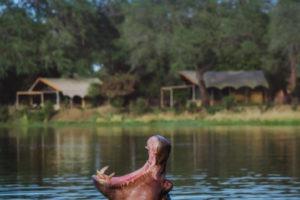 chongwe river camp hippo camp