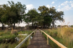duba expedition camp botswana walkway