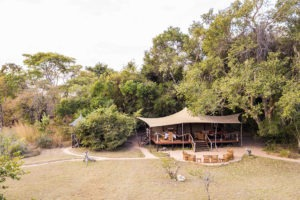 fig tree aerial camp
