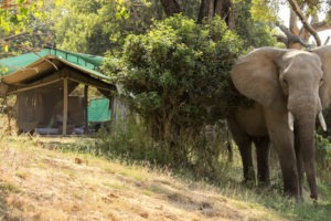 gbc elephant tent