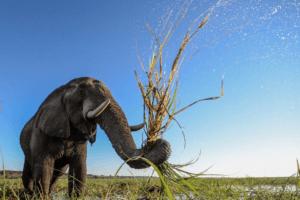 houseboat photographic safari chobe river elephant close up