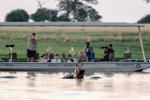 houseboat photographic safari chobe river hippo along boat