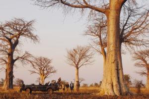 kaingo camp baobab forest