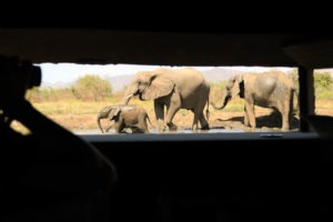 kavinga camp mana hide elephants