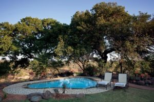 kings camp timbavati pool