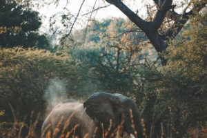 luambe camp elephant dust