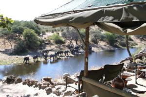 makgadikgadi pans bushmen experience meno a kwena