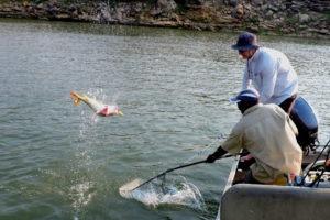 mutemwa lodge zambezi fishing