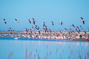 namibia fat bike flamingos