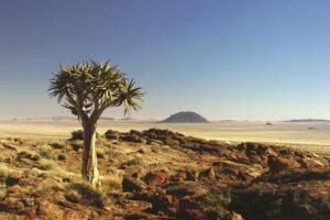 namibia photo safari namib rand