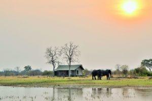 nogotsaa pans elephant tent