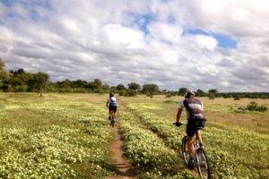 northern tuli botswana cycling safari landscape flowers