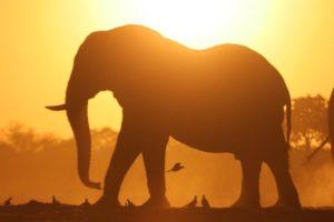 okavango delta bush skills training elephant sunset