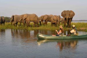 sausauge tree camp canoe elephant